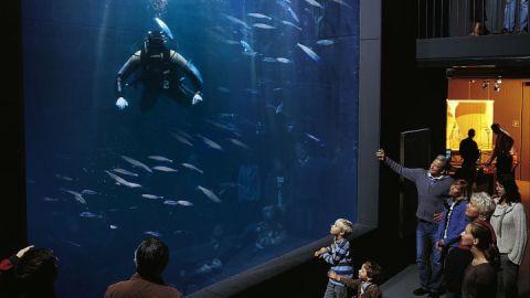 Aquarium_A.Duerst