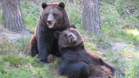Bären 2009 050