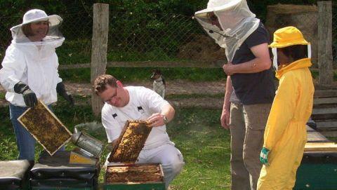 Imkerei im HaustierparkÖffnung Bienenkasten mit Zuschauern