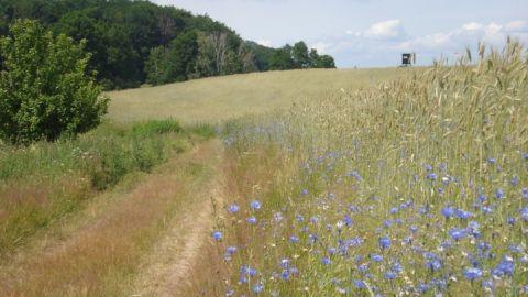 naturnah wandern