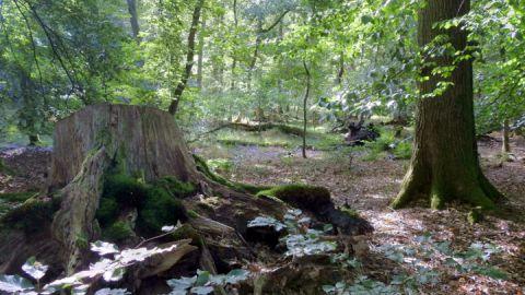 Wald_Devener Holz