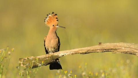 Naturfotografie - Roman Vitt
