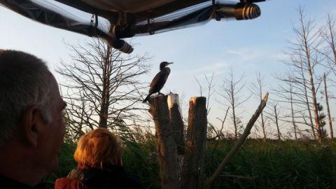 vogelbeobachtung-peenesafari-abenteuer-peenetal