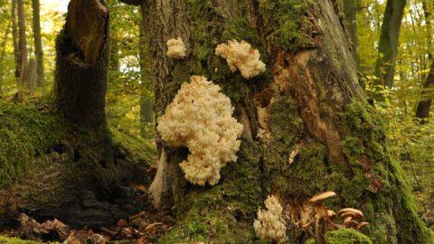 Totholz im Welterbegebiet Serrahn