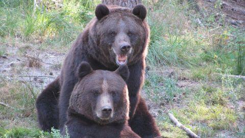 Die Braunbären Fred und Frode gehören zu den Besucherlieblingen